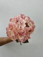 Гортензия «розово пудровая»