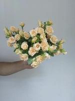 Роза «мелкая»-3