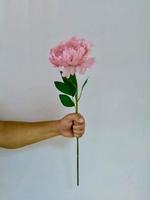 Пион «фламинго»