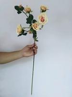 Роза «золотистая»